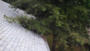 Tree branches that are touching a roof